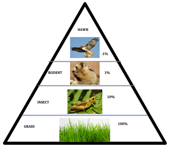 Food Chains, Webs, And Energy Pyramids Lessons Tes Teach