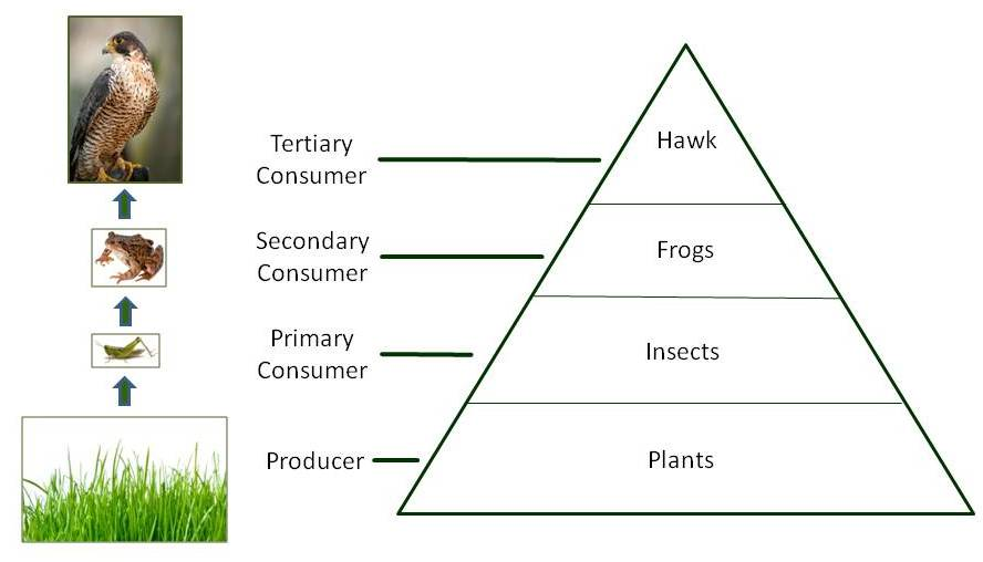 Energy Pyramid YouTube