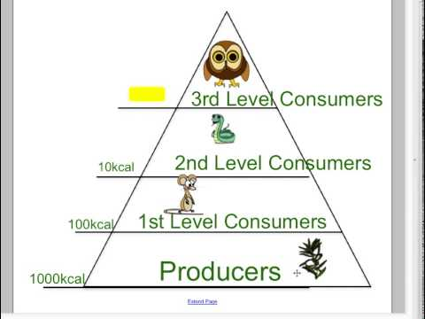 Energy Pyramid: Lesson for Kids | Study.com