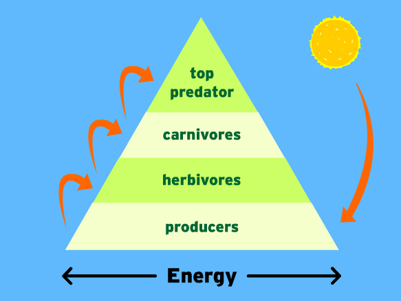 Play Energy Pyramid DPISD by Rachelle Corry on TinyTap