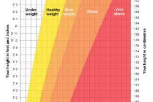 height and weight chart for women weight chart