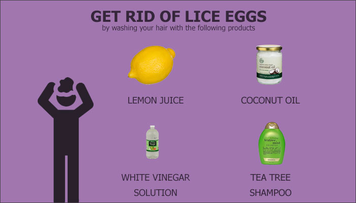 What Do Head Lice Eggs Look Like? | Head Lice Center