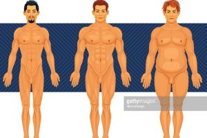 male body types male body type anatomy vector id