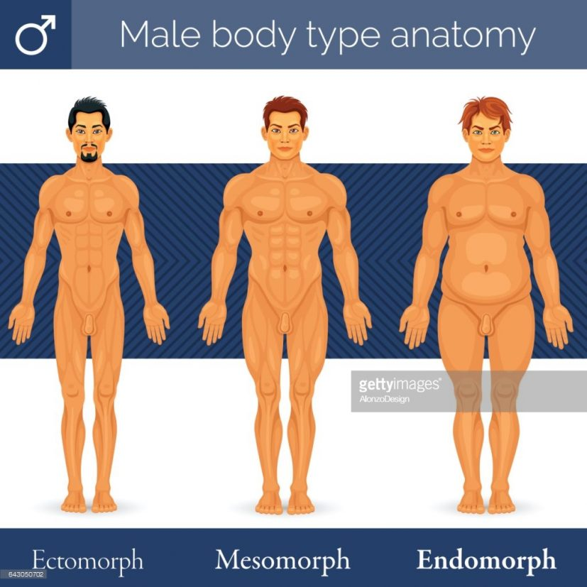 Male Body Type Anatomy Vector Art | Getty Images