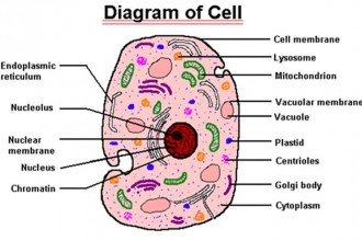 Parts Of A Cell Lessons Tes Teach