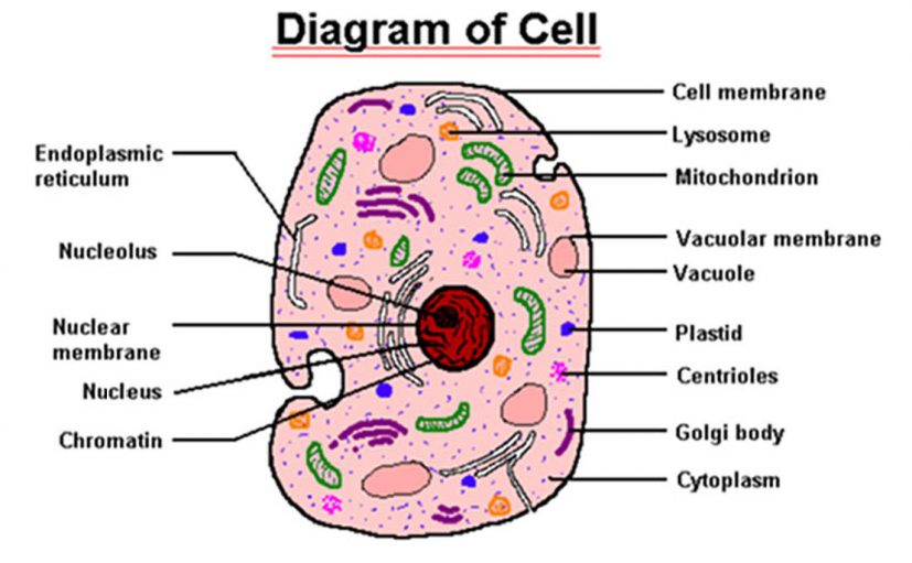 Parts Of Cell : 5 Parts Of Cell Pictures | Biological Science