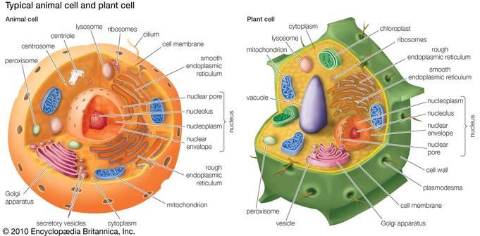PETruett Cell Parts and Functions