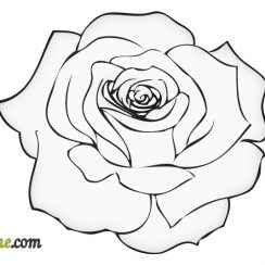 rose drawing easy rose drawing outline