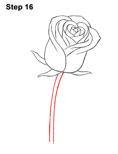 how to draw a rose bud, rose bud step 10 … | Pinteres…