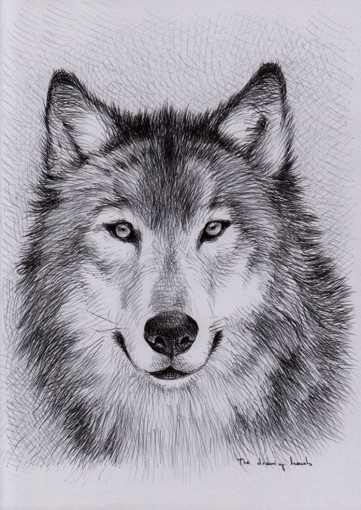 unique wolf drawings Google Search | Art | Pinterest | Wolf
