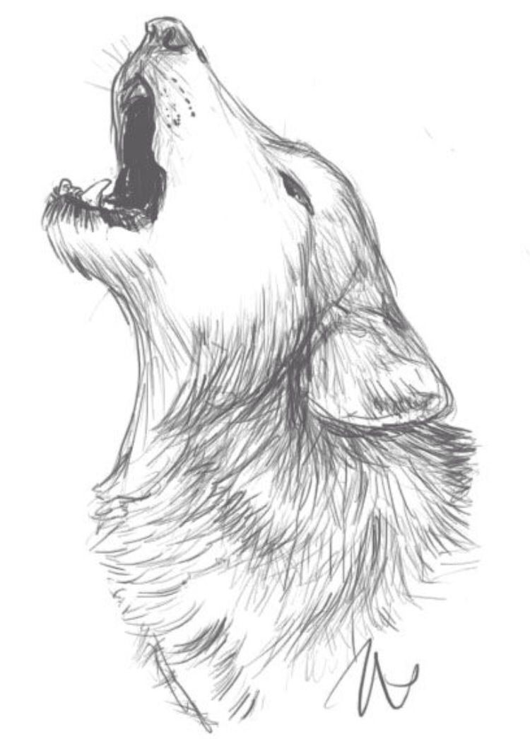 Wolf drawing idea | Drawings | Pinterest | Drawing ideas, Wolf and