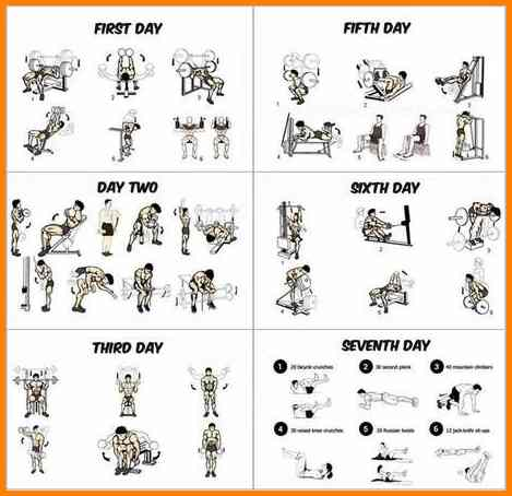 9+ gym workout schedule for men | primary write