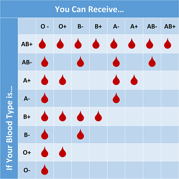 Blood Type Chart: Facts and Information on Blood Group Types