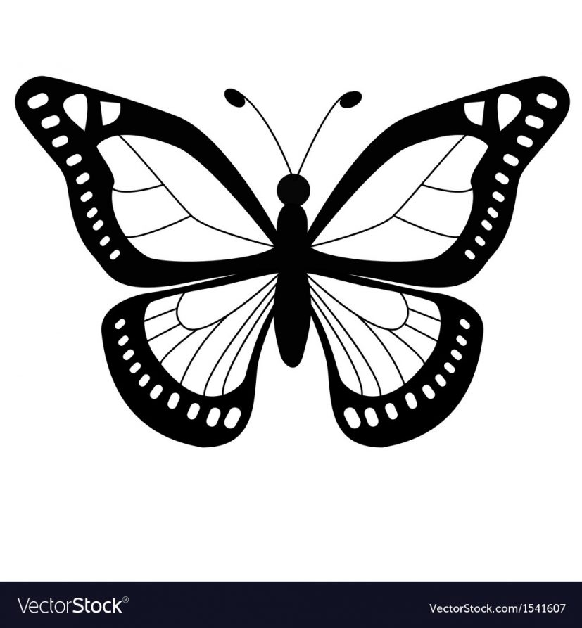 Butterfly Royalty Free Vector Image VectorStock