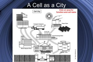 cell analogy project cell analogy project