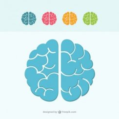 brain vector colorful brain icons