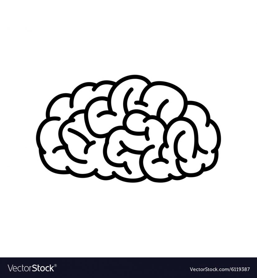 Outline Human Brain Royalty Free Vector Image VectorStock