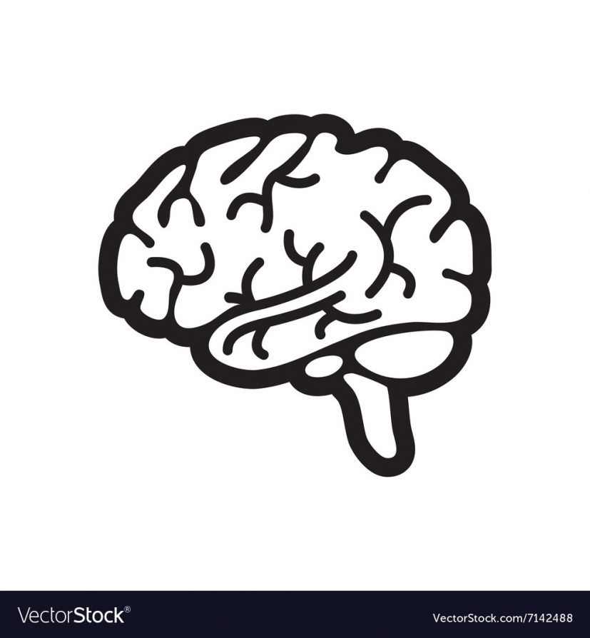 Stylish black and white icon human brain Vector Image