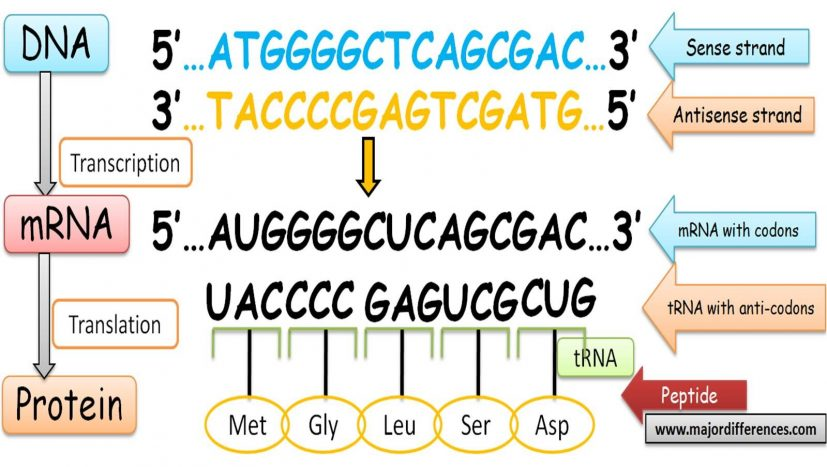 DNA and Proteins Genetics Generation