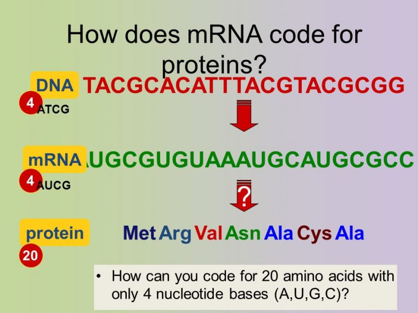 Difference between Sense and Antisense strands of DNA MD