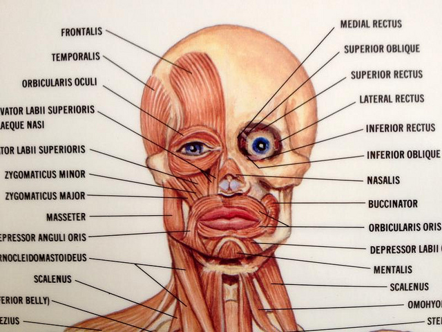 How To Tone Your Facial Muscles To Perfection