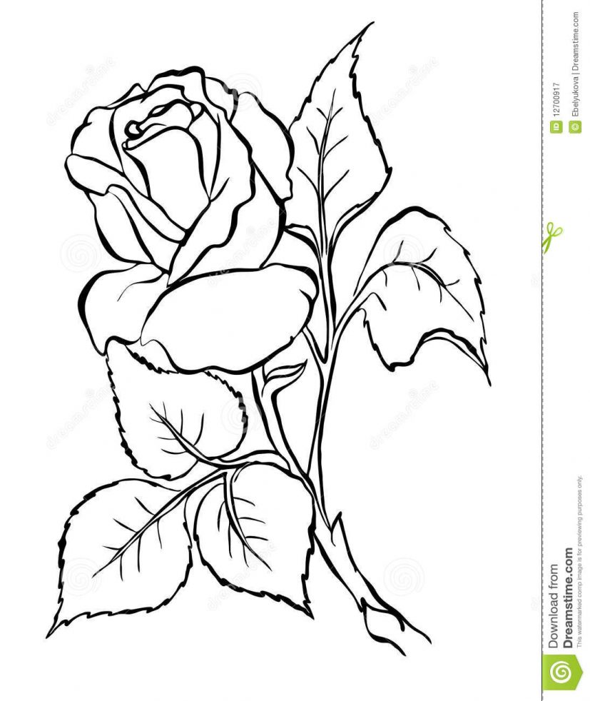 Rose. Freehand drawing. stock vector. Illustration of design