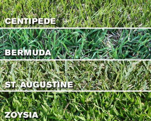 Lawn Care: Florida Grass Types and Mowing Heights l RT Property