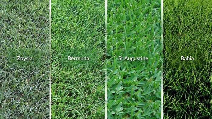 Types of Florida grass – Turf and Surf