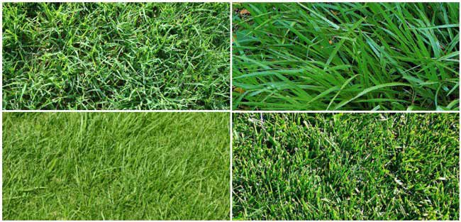 Choose a Grass Type for Your Lawn Lawn Dethatcher Reviews