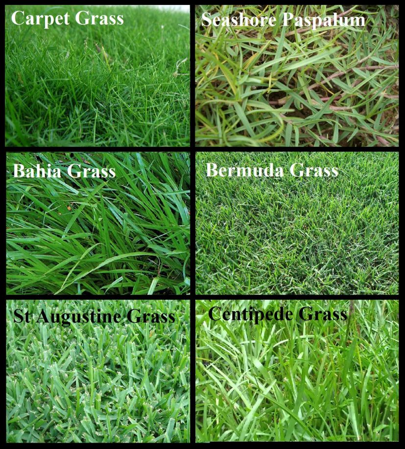 Types of Grass for Orlando Lawn Irrigation | Orlando Sprinklers