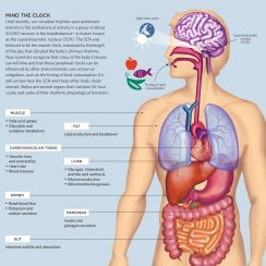 organs in the body human body vital organs beautiful organs of the human body systems of human body vital organs