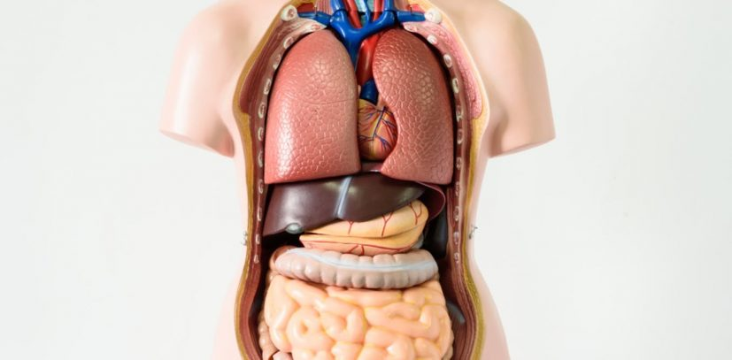 Seven body organs you can live without