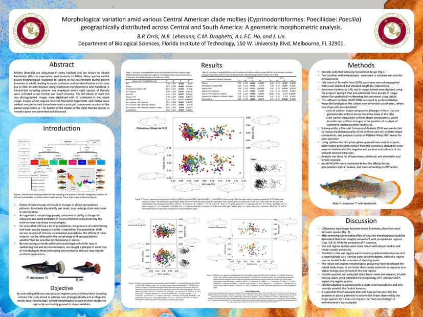 MASNA » MASNA Scientific Poster Session