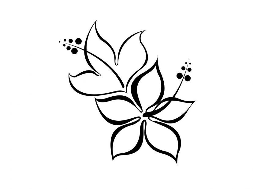 Simple Flower Drawings Black Whitefree Designs Hibiscus Tierra